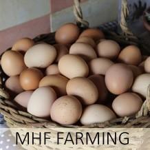 MHF Farming
